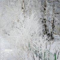 Причуды зимы :: Татьяна Степанова