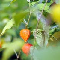 летние цветы :: Андрей Куприянов