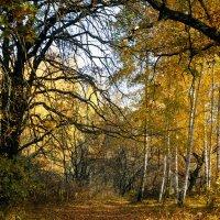 осень золотая :: Андрей ЕВСЕЕВ