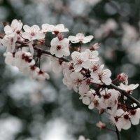 Веточка весны :: Виолетта