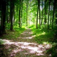 По лесной дорожке :: Владимир