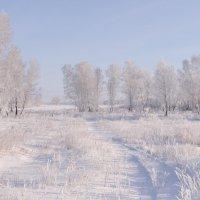 Зима не даром злится... :: Елена Тренкеншу