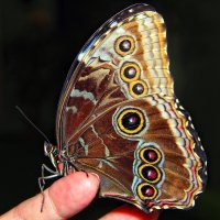 Бабочка :: Марина Назарова