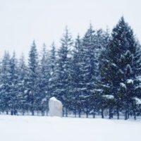 Воскресный снегопад :: Eugene A. Chigrinski