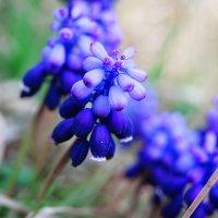 Красивый цветок ( не знаю название) :: Татьяна Гордеева