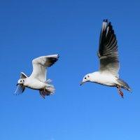birds :: Евгений Балакин