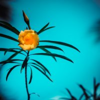 Yellow flower :: Vic Noon