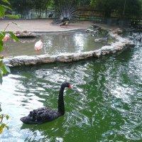 Jardin Botaniques :: liudmila drake
