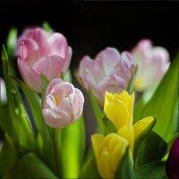 Всех фотографинь с 8 марта! :: Наталья Маркова
