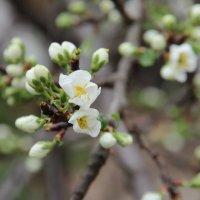 Весна. :: Larisa Gavlovskaya