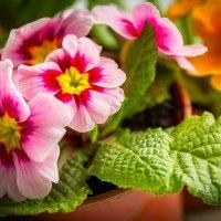 Ну вот, весна... :: Вячеслав Филиппов