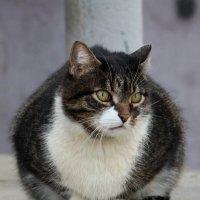Грустный котейка :: Dr. Olver