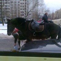 Лошади :: Любовь Игнатова