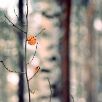 в лесу :: vladimir rozhanskii