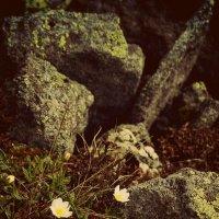 И около камней растут красивые цветы :: ИРИШКА КАЗАКОВА