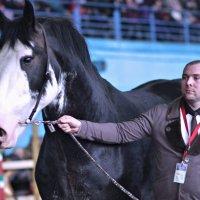 Минск. Выставка-шоу лошадей «Весна 2014». :: Nonna