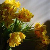 Весна :: Нелли *