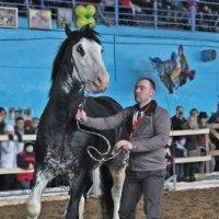 лошадь :: Светлана З