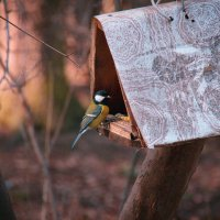 Птица-синица :: Мария Бродская (Гурьянова)
