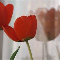Тюльпаны :: Katty Fox