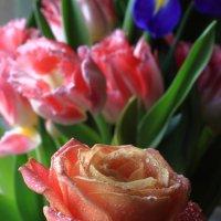 роза в пастельных тонах :: Сергей Борденов