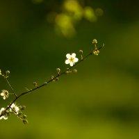 Да придёт весна! :: Сергей Бутусов