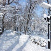 зимний парк :: Денис В.