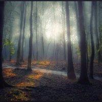 Весенний лес :: Ирэна Мазакина