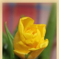 Один жёлтый, открытка :: Наталья Золотых-Сибирская