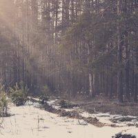 Весенняя нежность :: Наталья Михай