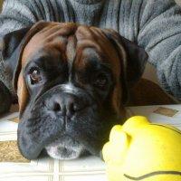 Портрет собаки :: Viktor