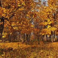 В золотой карете проскакала Осень... :: Татьяна Губина