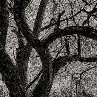 Дерево :: Nn semonov_nn
