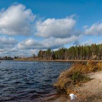 Осень на реке :: Юрий Сименяк