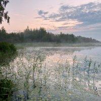 Утро на Даниковском озере :: Валерий Талашов