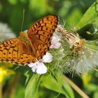 Бабочка :: Ирина Токарева