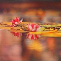 Прекрасные Цветы :: Алексей Латыш