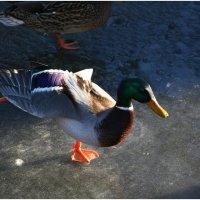 Балет на льду :: Флоуффлурр Рроуфф-Ниирсс