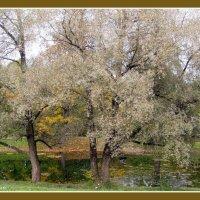 Осень в Пушкине :: vadim
