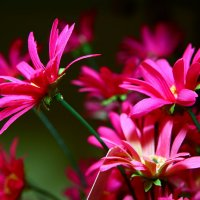 цветочки:) :: Анастасия Масюк