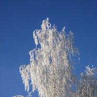 Зима :: Нина Кутеева