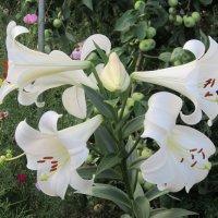 Цветы :: Нина Кутеева