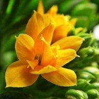 Цветок :: Жанна Егорова