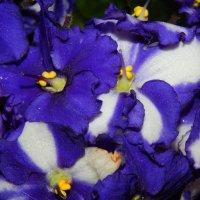 Загадочный цветок. :: Елена