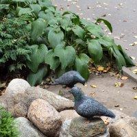Чугунные голуби. :: Sergey Serebrykov