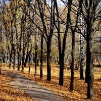 Осень в парке. :: Ольга Кривых