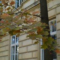 Осень во Львове :: Андрий Майковский