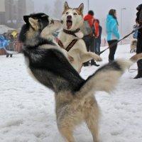 Мы танцуем буги-буги ))))))))) :: Светлана З