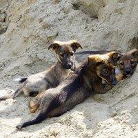 Дети устали играть в песочнице :: Ruslan Petrov