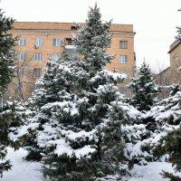 Снежные и пушистые в марте :: Александр